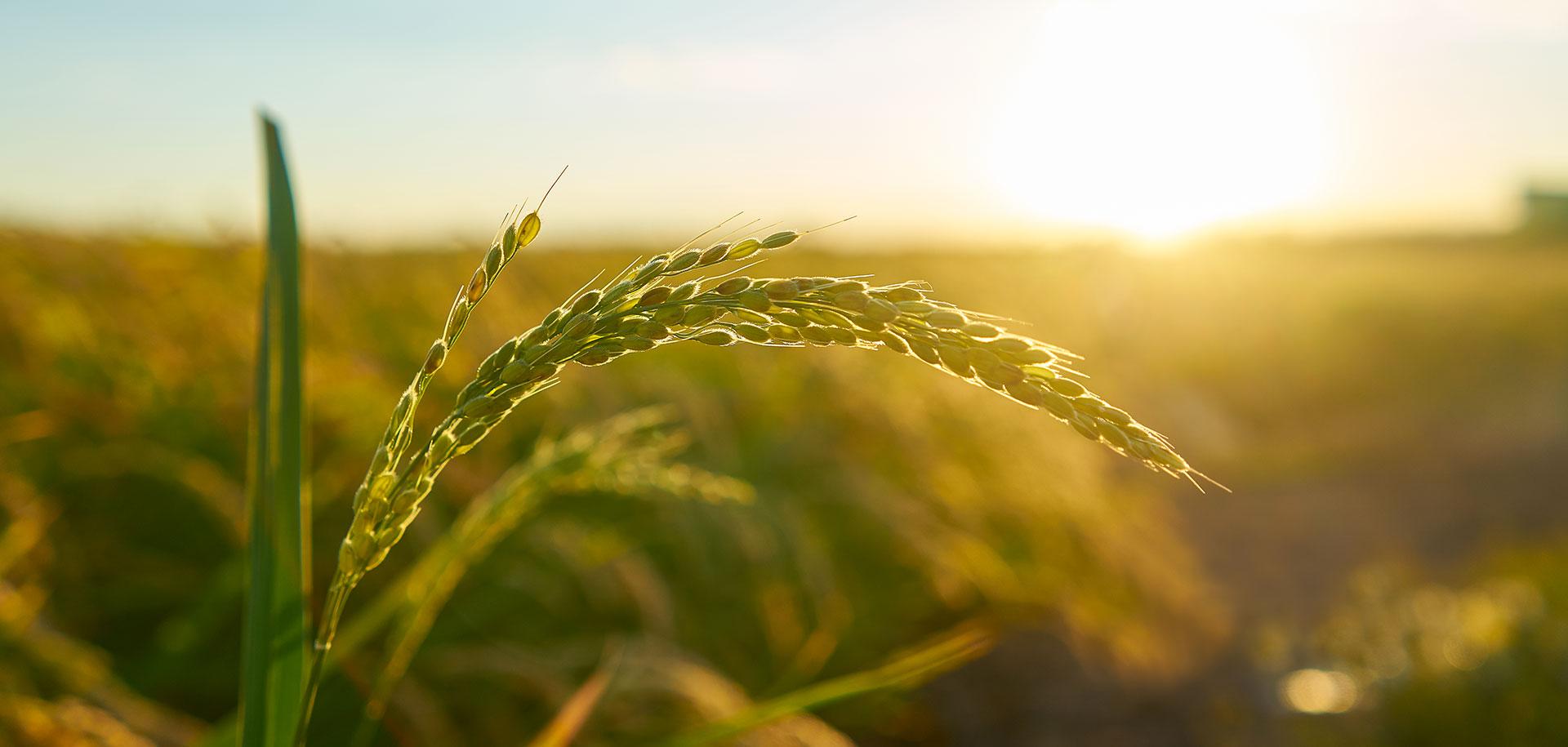 iniziative in sostegno all'agricoltura