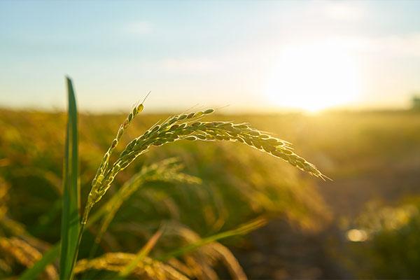 niziative in sostegno all'agricoltura
